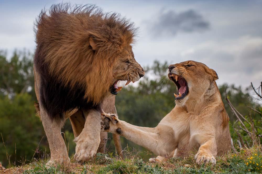 Greater Kruger Park