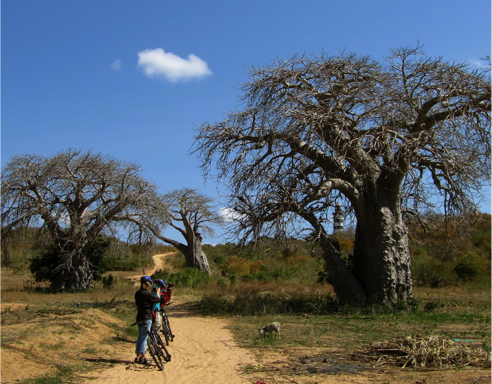 Mozambique Baobab Cycle Epic Africa