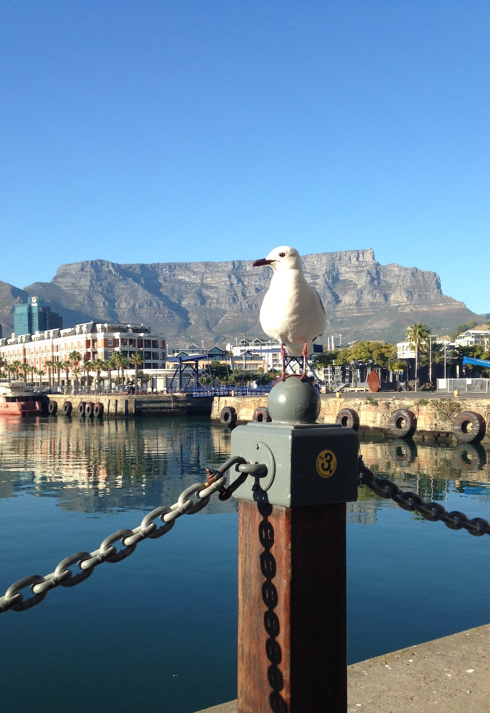 Cape Town Table Mountain Waterfront