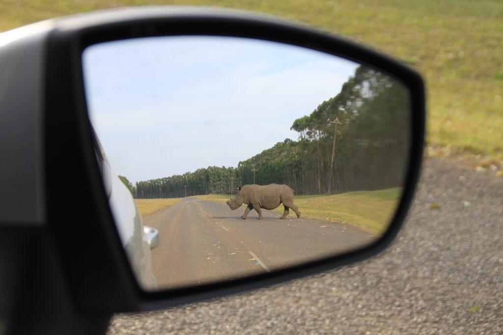 Epic Africa Safari iSimangaliso Wetland Park