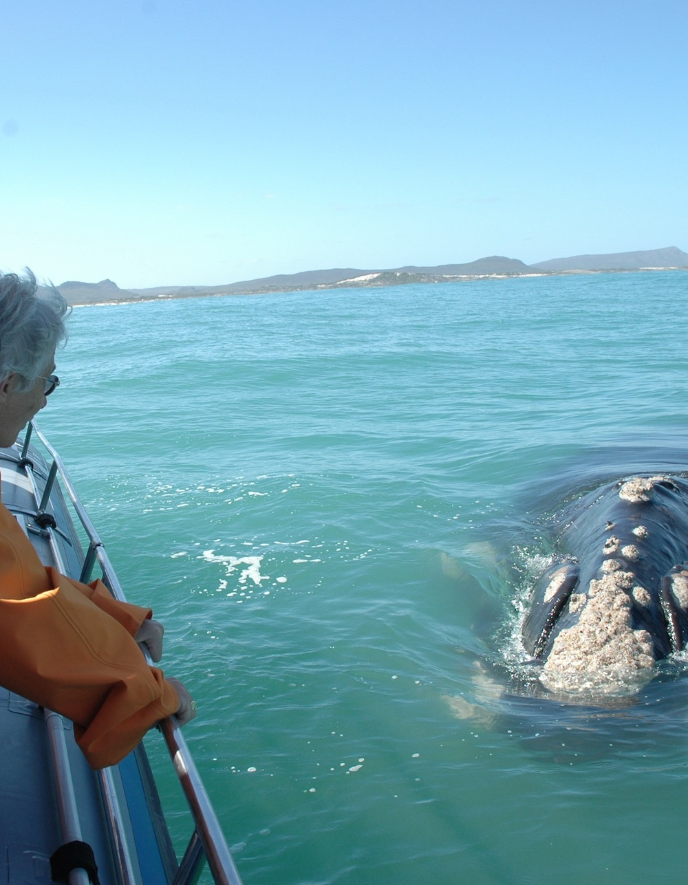Garden Route Whale Watching