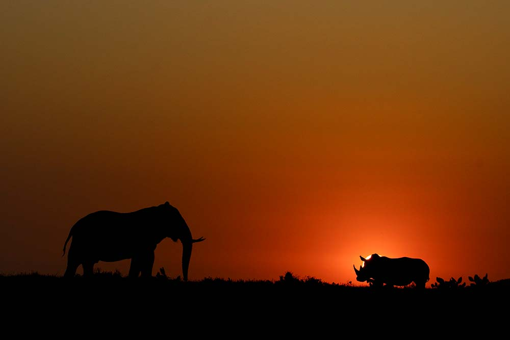 Malaria-Free Safaris