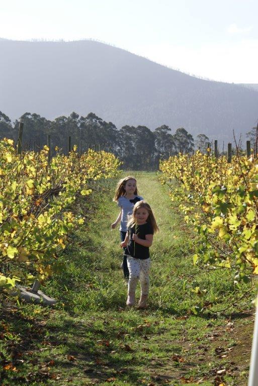 Bramon Wine Estate in the Crags